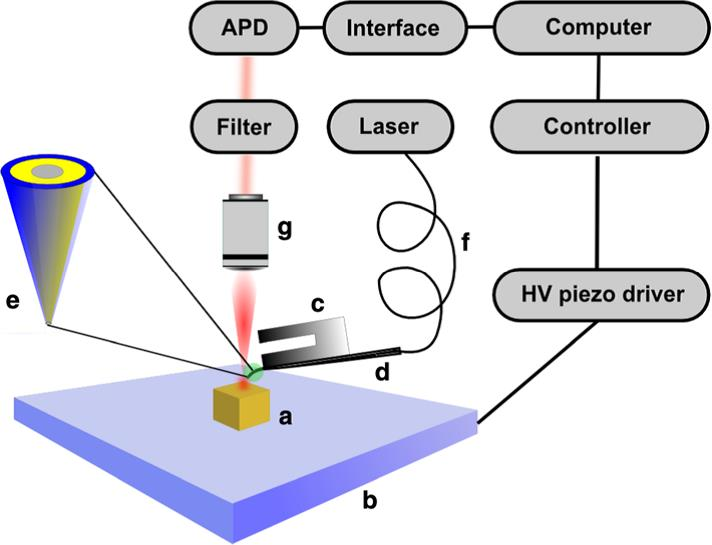 Nanoscale texture of secondary cell walls nanonics imaging since the samples are semi transparent the nsom measurements were conducted in reflection mode in this mode the light coming out from the probe aperture ccuart Choice Image